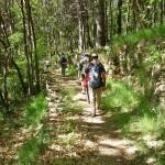 Chemin de randonnée pédestre